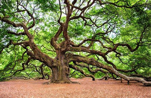 angel-oak-2018822__340